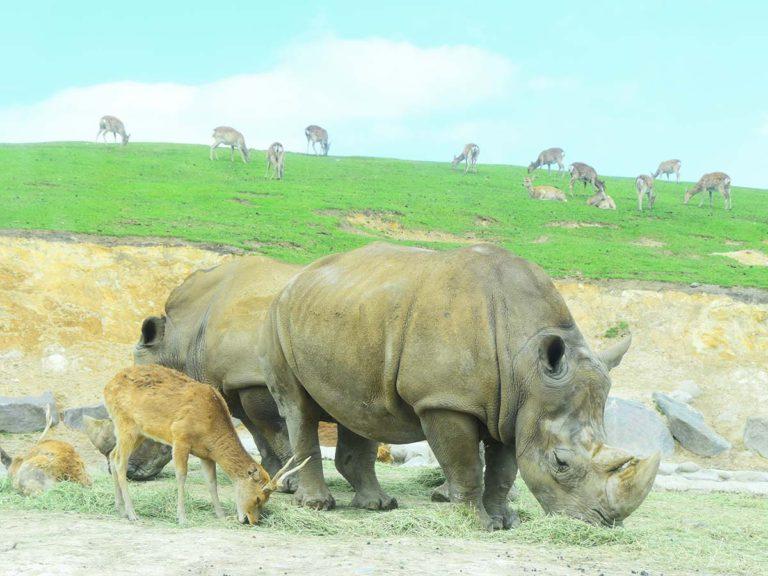 九州自然動物公園 アフリカンサファリ|基本情報(営業時間、料金、駐車場、見どころなど)