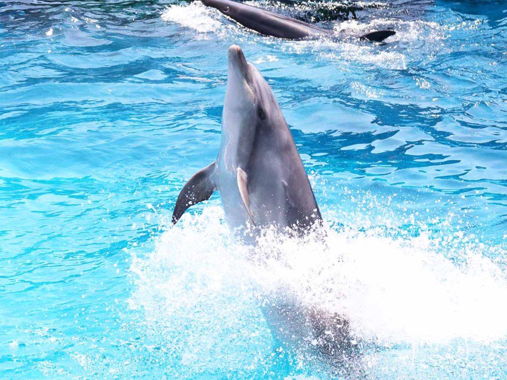 イルカ(仙台うみの杜水族館)
