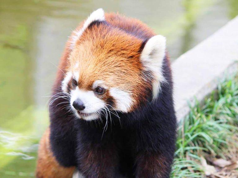 日本平動物園|基本情報(営業時間、料金、駐車場、見どころなど)