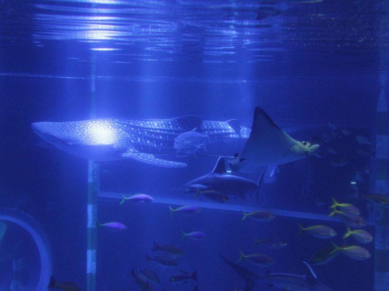 のとじま水族館|基本情報(営業時間、料金、駐車場、見どころなど)