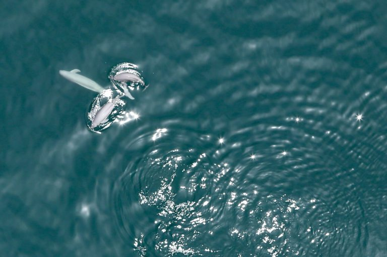 神戸市立須磨海浜水族園 写真展「空から瀬戸内海を眺めてみたら…」開催中