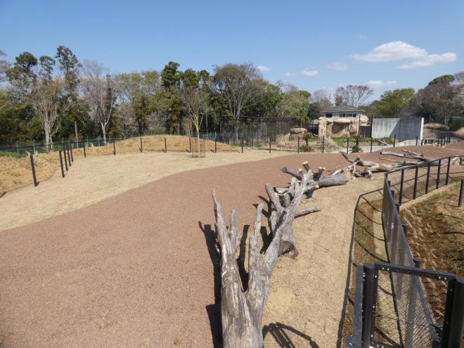 千葉市動物公園 平原ゾーンフルオープン グラントシマウマ展示場