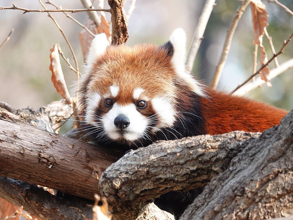 野毛山動物園|基本情報(営業時間、料金、駐車場、見どころなど)